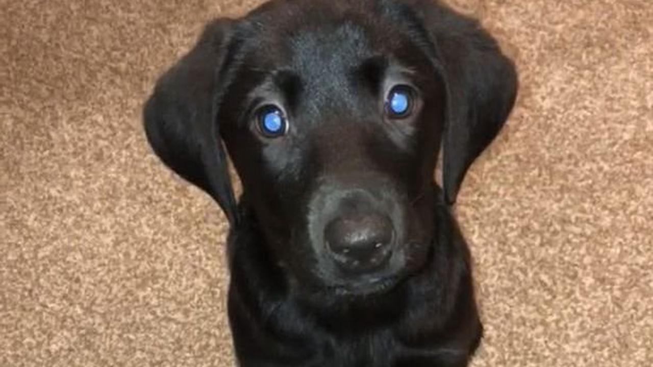 Vet's warning as cases of deadly dog virus surge after boom in lockdown puppies