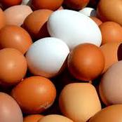 10 Factors That Affect Egg Production In Poultry