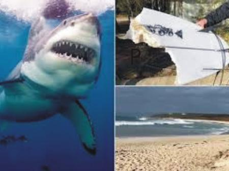 Twenty-year-old surfer attacked by great white shark at Australian beach as surfboard split in two