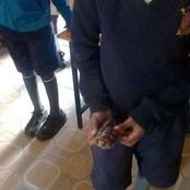 Drama As A Class 4 Pupil Is Found Carrying A Tortoise In School