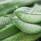 Check out how you can make use of aloe vera for hair growth