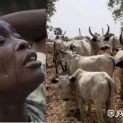 Beef Scarcity: High Cost Of Food Stuff Hits Southern States As Strike Continues
