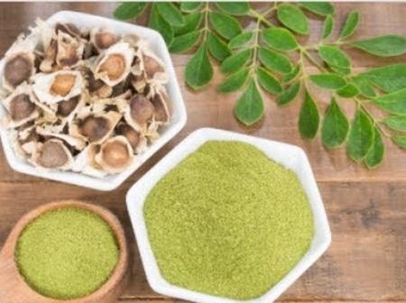 Benefits Of Moringa Oleifera