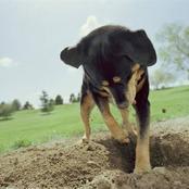 قصة..جلس أمام منزله فراي كلبه يلهو في حديقة جاره وفي فمه شيء وعندما اقترب منه أصيب بالصدمة
