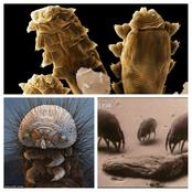 5 strange creatures that live on the human body.