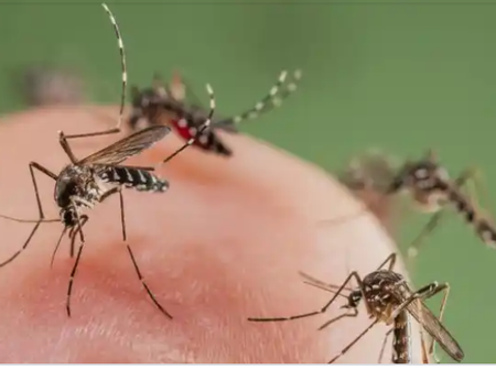 Health Tips: Natural Ways To Keep Mosquitoes Away From Your Home To Avoid Malaria