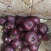 I Bought This Onions In Gombe For N70, Was Given Free Tomatoes Too. Farmers Are Loosing Money Daily