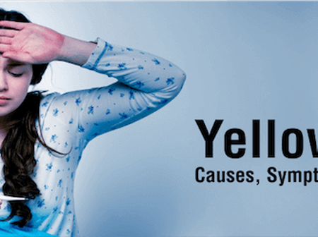 How Dangerous Yellow Fever Is and Its Symptoms