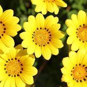 تعرف علي أهم أنواع الزهور ومناسبات تقديمها وعلاقتها بالنفسية