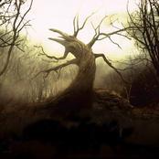 هل تعرف ما هي الشجرة التي تكون طعام أهل النار في الآخرة؟ وأين يقع مكانها في جهنم؟!
