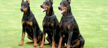 Top 10 best guard dog