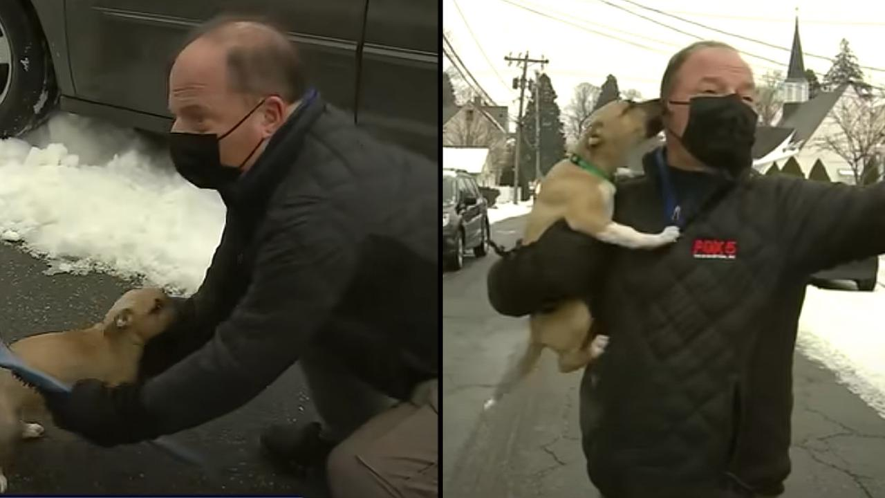 This Reporter Losing It After a Puppy Crashes His News Report Is All of Us