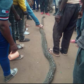 Super Big Snake Killed by residents in Machakos