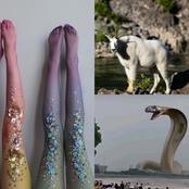 Inkanyamba(Water snake) can Imitate any Animal. |fiction