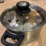 L'expérience amère des mangeurs de chats du quartier