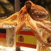 Meet Paul, The Octopus Who Accurately Predicted The Results of 8 Matches At The 2010 World Cup.