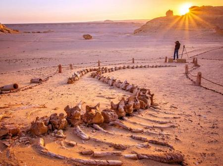 All You Need To Know About The Valley Of Whales In Egypt Which Contains 40 Million Years-Old Animals