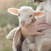 3 Reasons Why Jesus Is Called The Lamb Of God