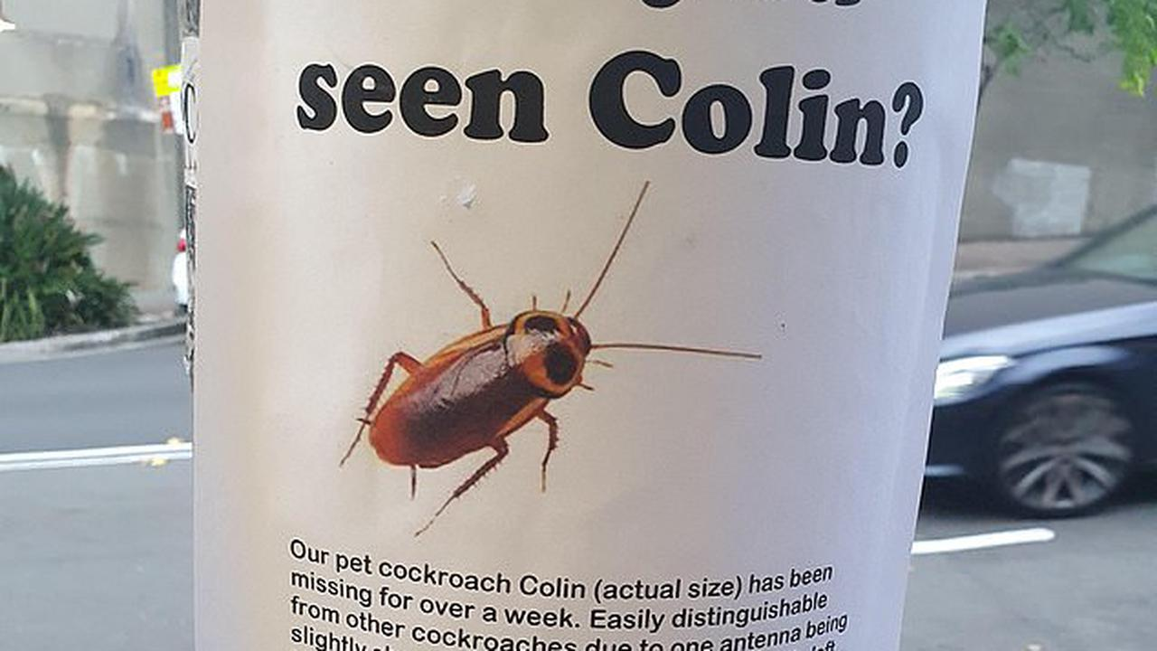 Hilarious poster begs for help finding a missing cockroach named Colin