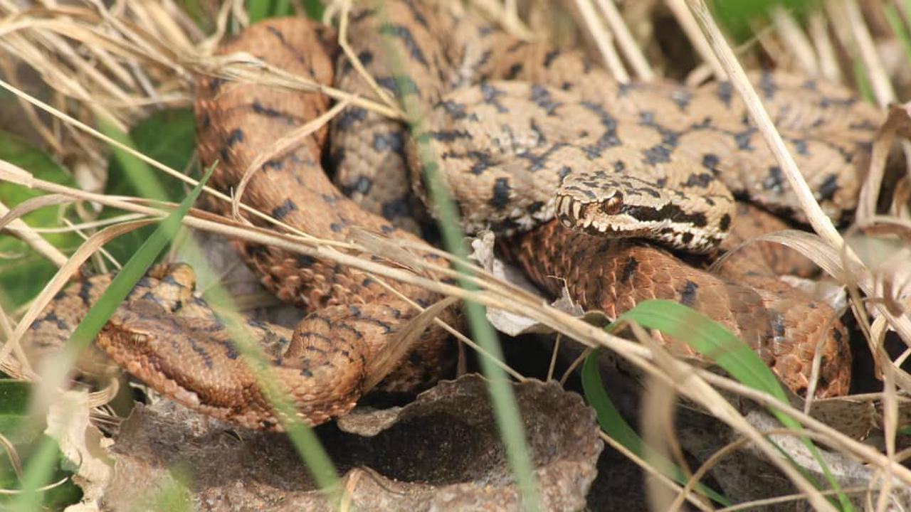 Loir-et-Cher : serpents, le temps aussi de l'observation