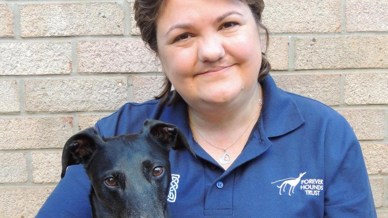 Dog hero Tracey nominated for a national award for rescuing greyhounds