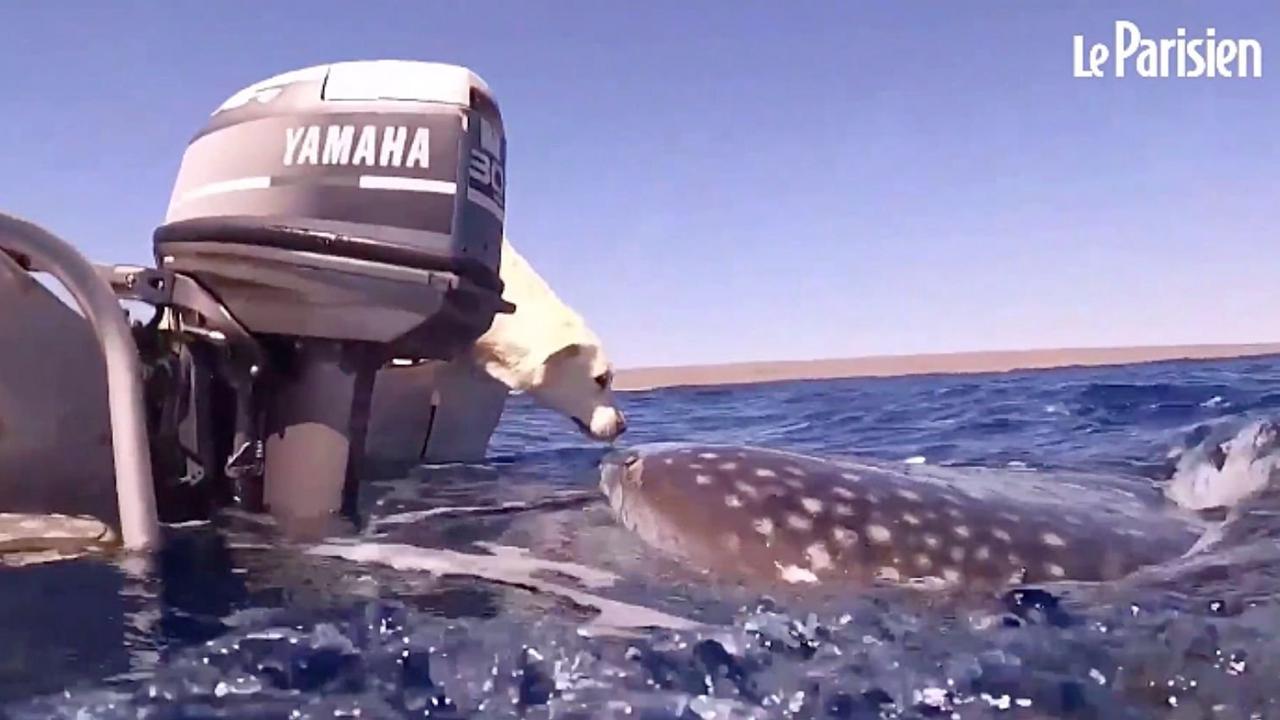 Vidéos. Californie: une baleine manque d'avaler deux kayakistes