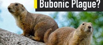 China Issues Bubonic Plague Warning: Its Causes, Symptoms And Preventive Measures You Must Know