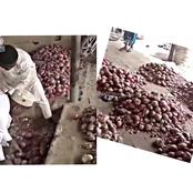 A Bag Of Onion Sold For N35,000 In The South Has Crashed To N7000 In The North – Kano Traders Lament