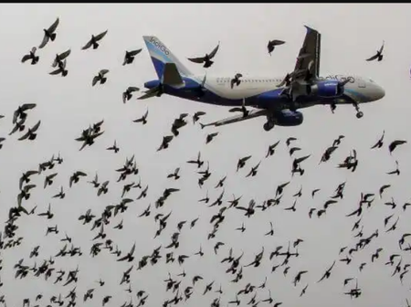 Sad Photos Of Birds Attacking And Damaging Airplanes Around The World