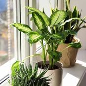See How You Can Easily Grow This Plant That will Change The Outlook Of your Home