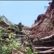 Panic In Central Kenya As A Mugumo Tree Falls Down In Kiambu