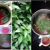 Are You In Shortage Of Blood? Worry No More, Use This Natural Herb To Build Up Your Blood