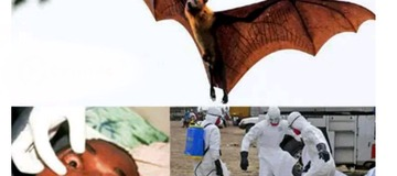 3 Virus Spread by Bats that are more Deadly Than Coronavirus.