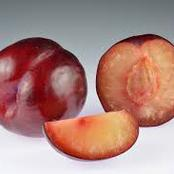 History Of Plum Trees And Their Hybrids