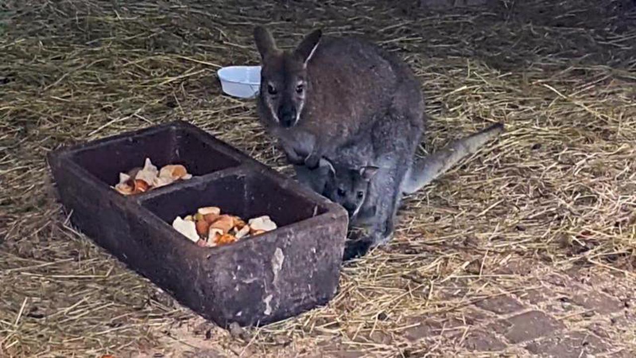 Illegaler Exotenhandel in Deutschland: Wie leicht kommt man an Känguru, Affe & Co.?